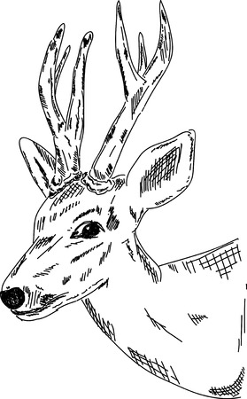 Vector - Deer - hand draw , isolated on background Vector