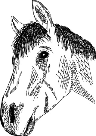 hand draw portrait horse isolated on background Vector