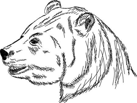 hand draw portrait bear isolated on background