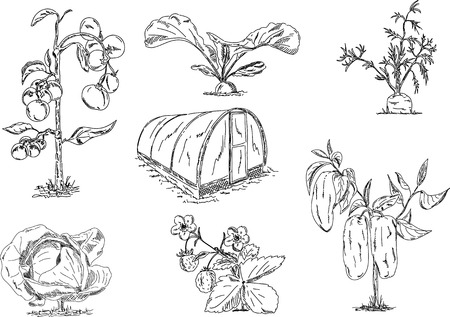 set of vegetables with greenhouse Vector
