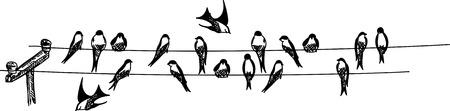 black beak: swallows sitting on phone wire