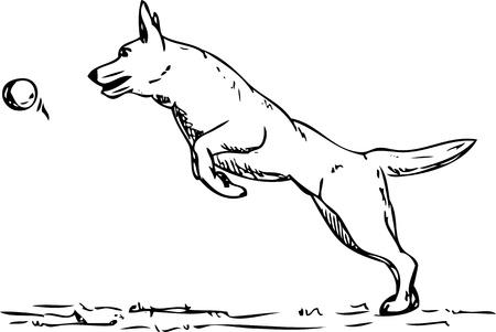 dog agility: vector - dog agility , isolated on background
