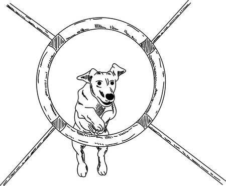 vector - dog agility , isolated on background