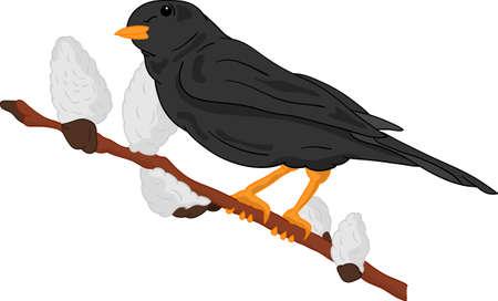 vector - spring time - bird on branch Vector