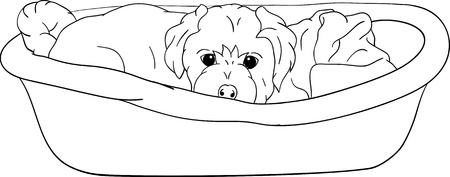 small puppy lying in cot, isolated on background Vector