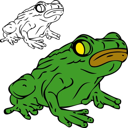 frog isolated on white background Vector