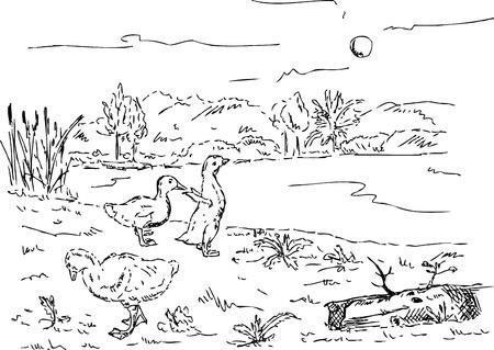 거위: 벡터 - 연못, 손 그리기에서 새끼