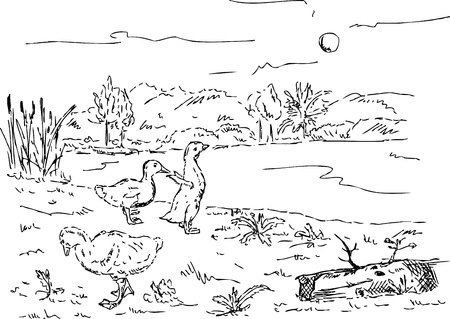 geese: vector - goslings at the pond , hand draw