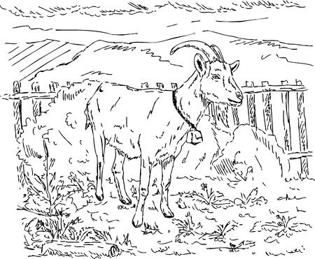 vector  - goat in the garden, hand draw Stock Vector - 11560983