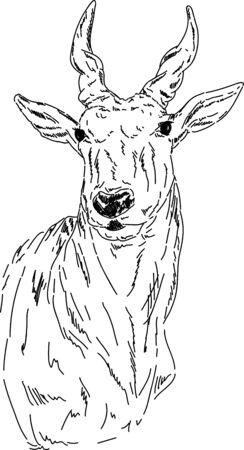 of antelope: vector - Hand draw portrait of antelope impala  Illustration