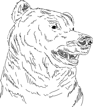 grizzly: vector - hand draw portrait of Grizzly bear