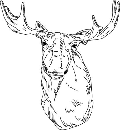 caribou: vector - cariboo portrait isolated on background