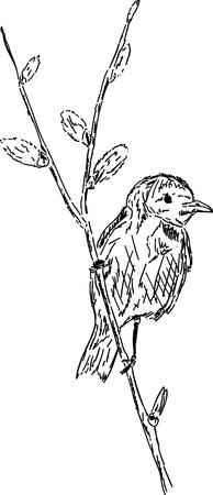 oiseau dessin: Le printemps - oiseau sur la branche Illustration
