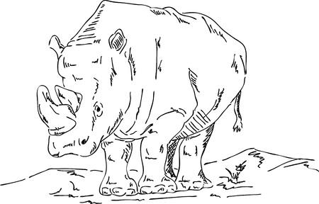 vector - big rhino isolated on background Stock Vector - 13550614