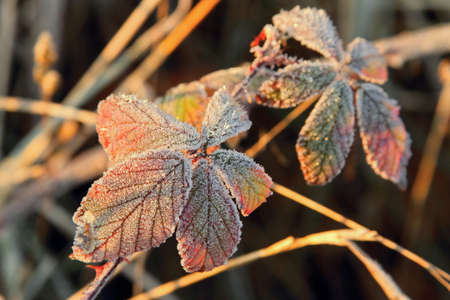 Frozen foliage at autumn time photo