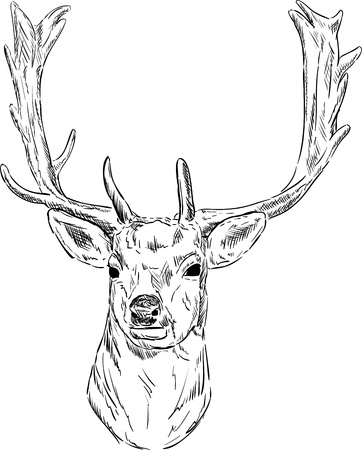 deer vector: vector - portrait fallow deer isolated on background Illustration
