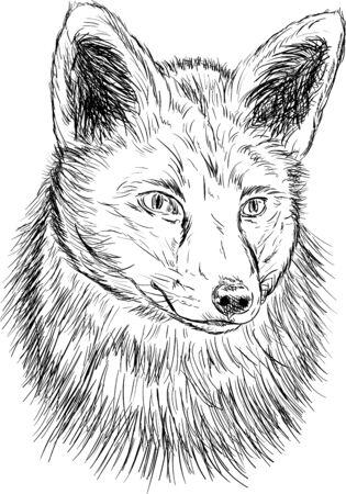 black fox: vector - fox head isolated on background