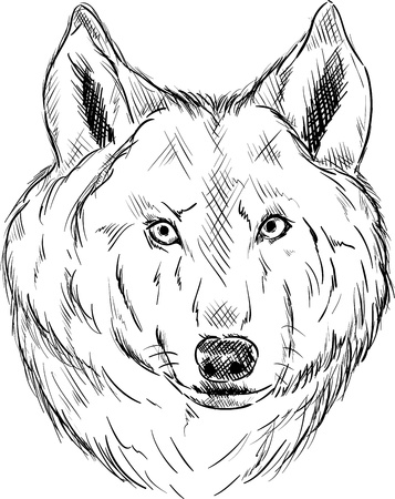 vector - Wolf head isolated on background Vector