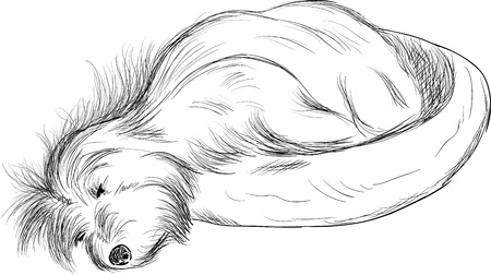 Dog sleeping in dog bed ( Cotton de Tulear) , isolated on background Vector