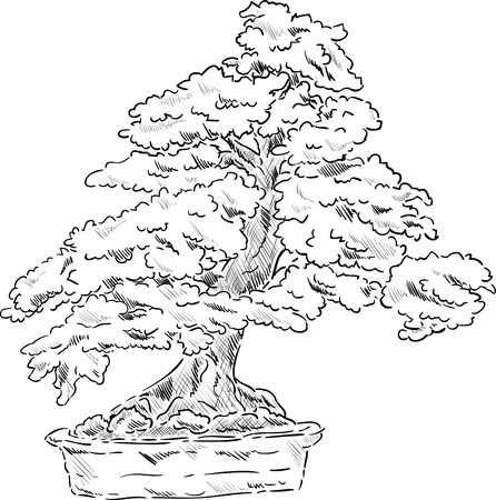 bonsai: vector - bonsai tree in a flowerpot , isolated on background