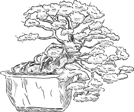 bonsai tree: vector - bonsai tree in a flowerpot , isolated on background
