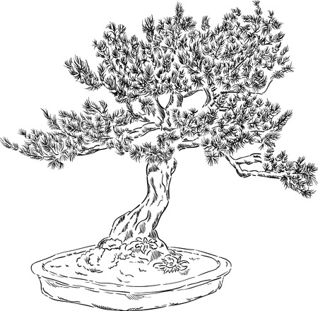 vector - bonsai tree in a flowerpot , isolated on background Vector