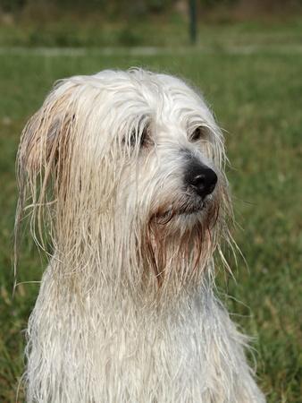 uncommon: Wet uncommon breed of dog