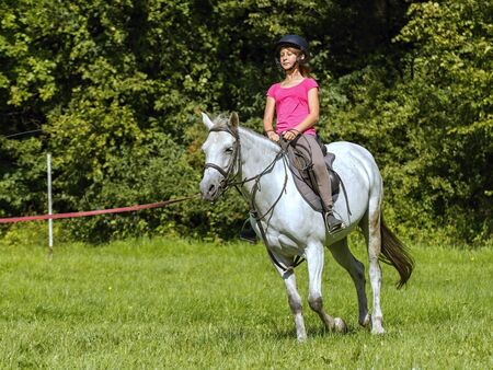 girl on horse: A young girl learns to ride a white horse