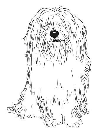 black dog: vector - rare dog - Coton de Tulear - isolated on background