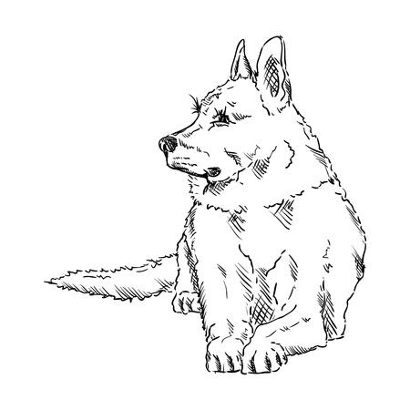 german shepherd dog: vector - German Shepherd - isolated on background