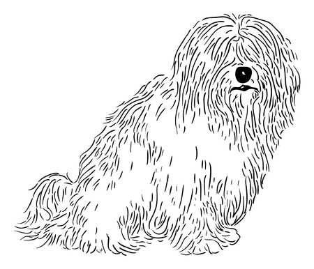 rare: vector - rare dog - Coton de Tulear - isolated on background