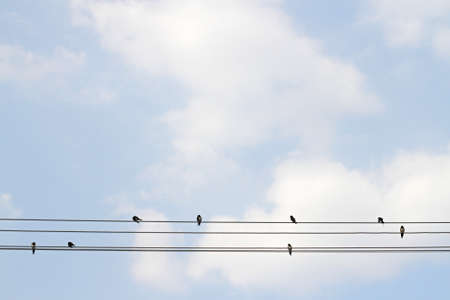golondrinas: Group of  Barn Swallows on wire , clouds background Foto de archivo