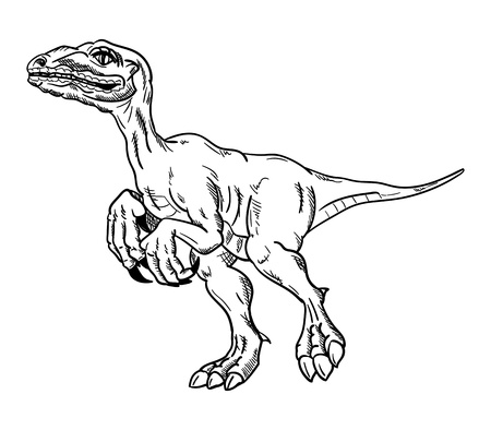 t rex: dinosaur , isolated on background