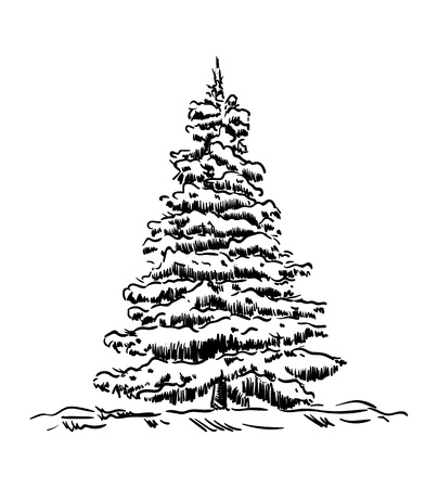 jungle plants: vector - spruce tree at winter time