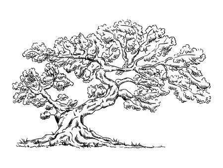 vecteur - Grand vieil arbre - isolé sur fond