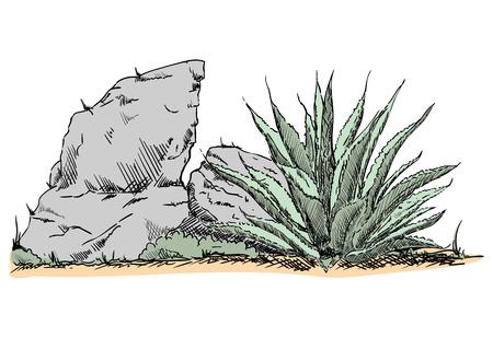 vector - cactus in desert - desert countryside