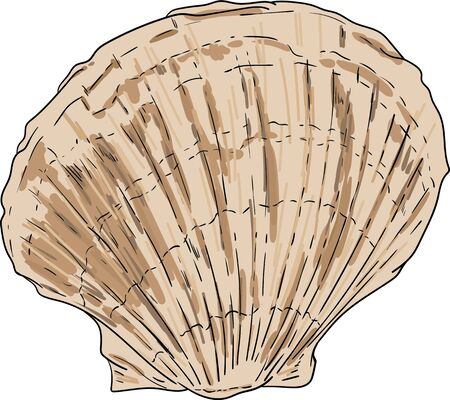 vector - sea shell isolated on background
