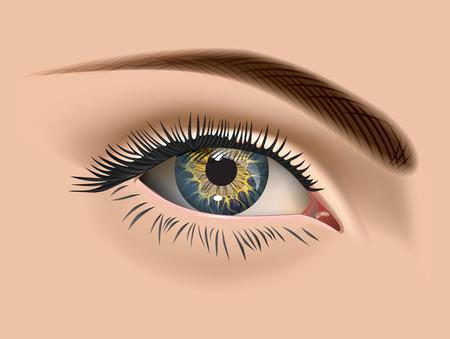 eye closeup: Female eye closeup. Vector