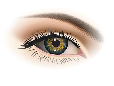 maquillaje de ojos: Mujer primer ojo. Vector