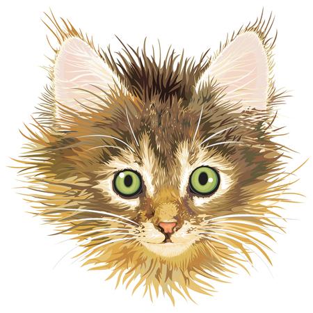 sadness kitten, vector Vectores