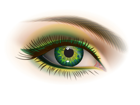 Green female eye and makeup. Realistic vector image