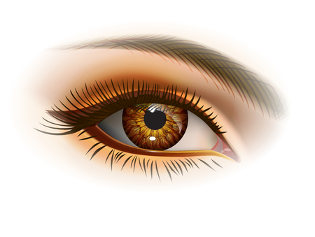 Brown female eye and makeup. Realistic vector image