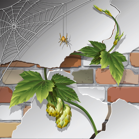 Brick wall, plaster, hops and spider web with spider. Background, texture Vector