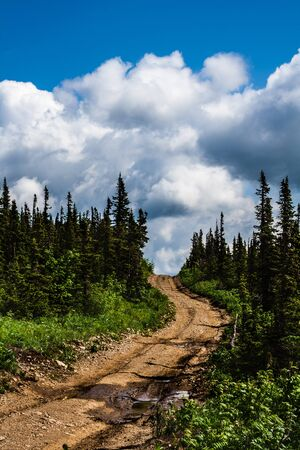 unruffled: Forest road rises up to the sky