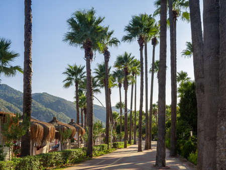 Coastline promenade with palm trees in Marmaris town, Turkey. walking path with palm trees along the seashore.