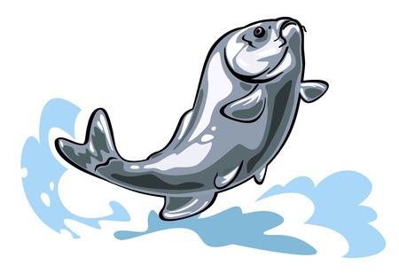 common carp: Vector illustration of a big carp jumping