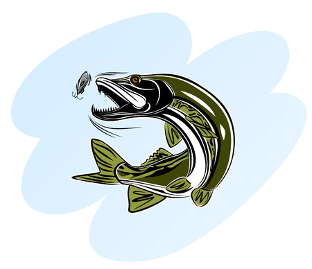 Vector illustration of a pike attacking the bait