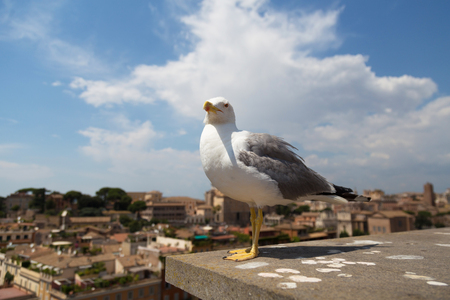 close shot: Seagull close shot in Palatine Hill Italy Roma Stock Photo