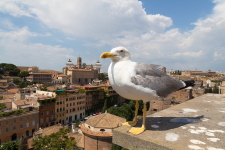 mew: Seagull close shot in Palatine Hill Italy Roma Stock Photo