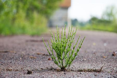 Groeien uit de asfaltplant